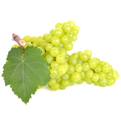 ensamblaje-uva